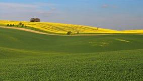 Τοπίο Moravian Τοσκάνη, νότια Μοραβία, Τσεχία Στοκ εικόνα με δικαίωμα ελεύθερης χρήσης