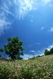 τοπίο mountaintop Στοκ Εικόνες