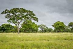 Τοπίο Pantanal στον τομέα ιππασίας Στοκ εικόνες με δικαίωμα ελεύθερης χρήσης