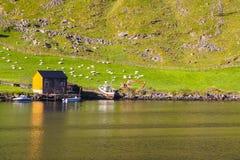 Τοπίο Sognefjord, Νορβηγία, Σκανδιναβία στοκ εικόνα με δικαίωμα ελεύθερης χρήσης
