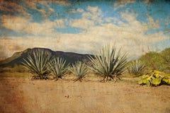 Τοπίο Tequila Στοκ Φωτογραφίες
