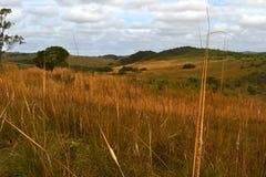 Τοπίο UruguayΣτοκ εικόνες με δικαίωμα ελεύθερης χρήσης