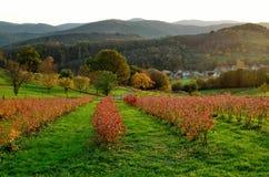 Τοπίο Vosges Στοκ εικόνα με δικαίωμα ελεύθερης χρήσης