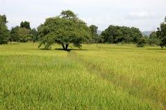 Τοπίο wirh ricefields Ταϊλάνδη στοκ εικόνες