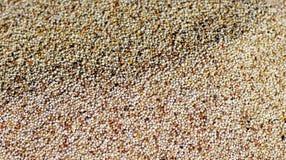 Τοπικά σιτάρια για την πώληση σε Lalibela στοκ εικόνες με δικαίωμα ελεύθερης χρήσης