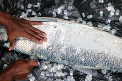 Τοπικές κλίμακες ψαριών ξυσίματος ατόμων Στοκ εικόνα με δικαίωμα ελεύθερης χρήσης