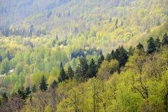 Τοπική άποψη σχετικά με Gauja Στοκ εικόνες με δικαίωμα ελεύθερης χρήσης