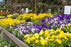 τοπική αγορά λουλουδιών Στοκ Φωτογραφίες