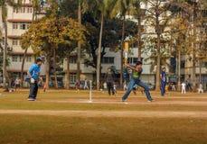 Τοπική αντιστοιχία γρύλων σε Mumbai Στοκ Φωτογραφίες