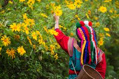 Τοπική φυλή λόφων στο ζωηρόχρωμο φόρεμα κοστουμιών στοκ φωτογραφίες