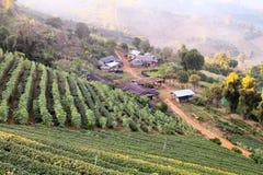 Τοπικός του χωριού αγρότης στοκ φωτογραφίες με δικαίωμα ελεύθερης χρήσης