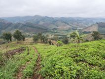 Τοπικό αγρόκτημα φυτειών στοκ φωτογραφίες με δικαίωμα ελεύθερης χρήσης