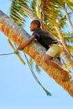 Τοπικό αγόρι που αναρριχείται στο φοίνικα στην ταλάντευση σε μια ταλάντευση σχοινιών σε Lavena Στοκ Εικόνα