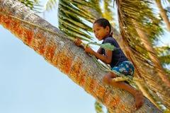 Τοπικό αγόρι που αναρριχείται στο φοίνικα στην ταλάντευση σε μια ταλάντευση σχοινιών σε Lavena Στοκ φωτογραφία με δικαίωμα ελεύθερης χρήσης