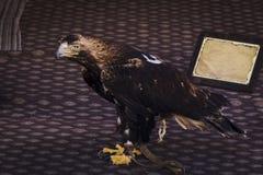 Τοποθέτηση αετών ήρεμα σε μια έκθεση Στοκ φωτογραφία με δικαίωμα ελεύθερης χρήσης