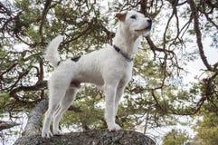 Τοποθέτηση σκυλιών Στοκ φωτογραφία με δικαίωμα ελεύθερης χρήσης