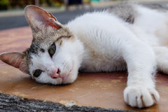 Τοποθέτηση της γάτας Στοκ εικόνα με δικαίωμα ελεύθερης χρήσης