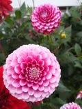 Τοποθετήσεις λουλουδιών Στοκ Εικόνα