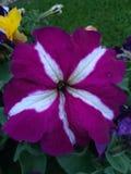Τοποθετήσεις λουλουδιών Στοκ φωτογραφία με δικαίωμα ελεύθερης χρήσης