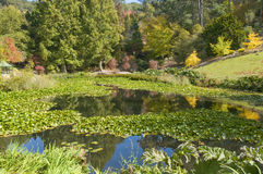 Τοποθετήστε τους υψηλούς βοτανικούς κήπους, Νότια Αυστραλία Στοκ Εικόνες