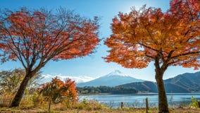 Τοποθετήστε το Φούτζι με το δέντρο σφενδάμνου Στοκ φωτογραφία με δικαίωμα ελεύθερης χρήσης