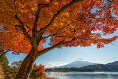 Τοποθετήστε το Φούτζι με το δέντρο σφενδάμνου Στοκ Φωτογραφίες