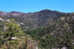 Τοποθετήστε Lemmon, Tucson, Αριζόνα, Ηνωμένες Πολιτείες στοκ φωτογραφία