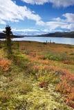 Τοποθετήστε McKinley από τη λίμνη κατάπληξης με το ζωηρόχρωμο τοπίο Στοκ εικόνα με δικαίωμα ελεύθερης χρήσης