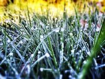 Τοποθετημένη αιχμή παγετός χλόη Στοκ Φωτογραφία