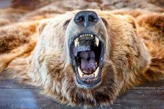 Τοποθετημένος αντέξτε με το ανοικτό στόμα Στοκ Φωτογραφίες