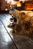 Τοποθετημένος αντέξτε με το ανοικτό στόμα Στοκ Εικόνα