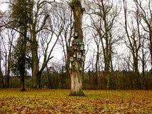 Τοποθετούμαι-κιβώτια στο περικομμένο δέντρο Στοκ Εικόνα