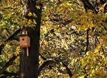 Τοποθετούμαι-κιβώτιο πουλιών Στοκ Φωτογραφία