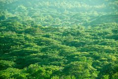 Τοπ άποψης πράσινο υπόβαθρο φύσης δέντρων δασικό αφηρημένο Στοκ φωτογραφία με δικαίωμα ελεύθερης χρήσης
