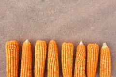 Τοπ άποψη, γλυκά δημητριακά στην εποχή συγκομιδών Στοκ Εικόνες