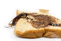 Τοπ άποψη μια νεκρή κατσαρίδα στο άσπρο υπόβαθρο Στοκ φωτογραφίες με δικαίωμα ελεύθερης χρήσης
