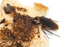 Τοπ άποψη μια νεκρή κατσαρίδα στο άσπρο υπόβαθρο Στοκ φωτογραφία με δικαίωμα ελεύθερης χρήσης