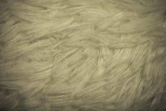 Τοπ άποψη σχετικά με τη σύσταση της άσπρης τεχνητής γούνας για το υπόβαθρο τόνος Στοκ φωτογραφία με δικαίωμα ελεύθερης χρήσης