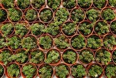 Τοπ άποψη της ομάδας κάκτου succulent σε ένα δοχείο Στοκ Εικόνα