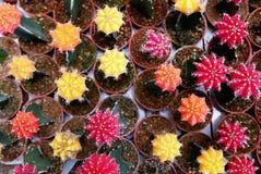 Τοπ άποψη της ομάδας κάκτου succulent σε ένα δοχείο Στοκ Εικόνες