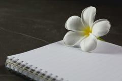 Τοπ άποψη του ανοικτού βιβλίου Βιβλίο ανοικτό, με τη μάνδρα και το λουλούδι στον πίνακα Στοκ φωτογραφία με δικαίωμα ελεύθερης χρήσης