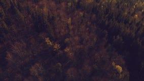 Τοπ άποψη του βαθιού δάσους απόθεμα βίντεο
