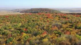Τοπ άποψη του δάσους δέντρων φυλλώματος κατά τη διάρκεια των χρωμάτων φθινοπώρου απόθεμα βίντεο