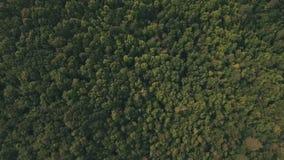 Τοπ άποψη του θερινού δάσους φιλμ μικρού μήκους