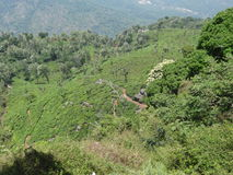Τοπ άποψη του κήπου τσαγιού ooty, Ινδία στοκ εικόνα με δικαίωμα ελεύθερης χρήσης