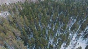 Τοπ άποψη του χειμερινού δασικού χιονώδους αγροτικού τοπίου με τα διάφορα δέντρα απόθεμα βίντεο