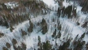 Τοπ άποψη του χειμερινού δασικού χιονώδους αγροτικού τοπίου με τα διάφορα δέντρα φιλμ μικρού μήκους