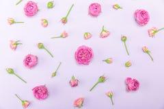 Τοπ άποψη του όμορφου διακοσμητικού σχεδίου από τα ρόδινους τριαντάφυλλα και τους οφθαλμούς Στοκ φωτογραφίες με δικαίωμα ελεύθερης χρήσης
