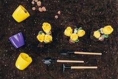 Τοπ άποψη των κίτρινων λουλουδιών που αυξάνεται στο χώμα, τα εργαλεία κηπουρικής και τα δοχεία λουλουδιών Στοκ Φωτογραφία