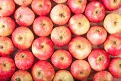 Τοπ άποψη των κόκκινων μήλων που βρίσκεται στις σειρές Στοκ Εικόνα